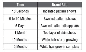 Dwell Times While Branding chart