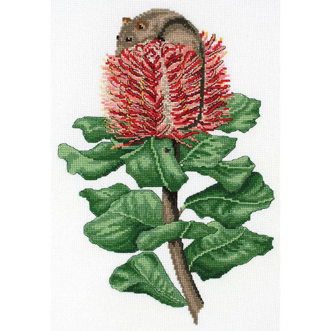 Honey Possum & Scarlet Banksia 577101