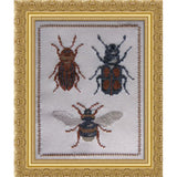 Free Project - Insect Collection