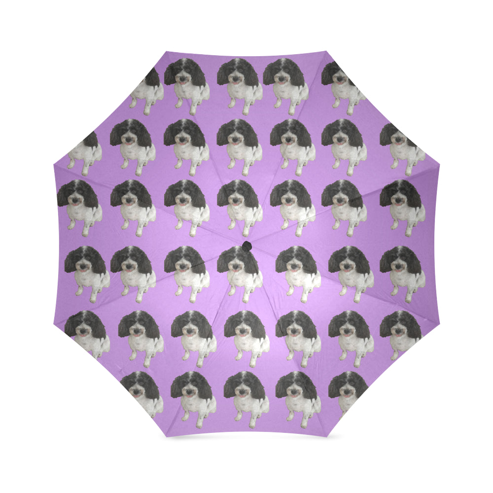 Cavapoo Umbrella 2