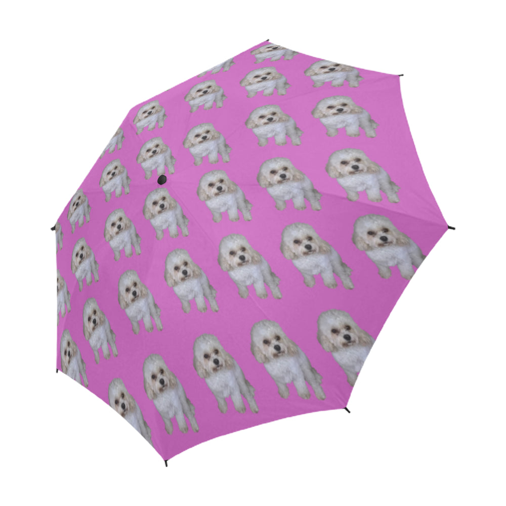 Cavachon Umbrella - Pink