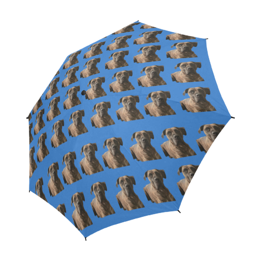 Boerboel/South African Mastiff Umbrella