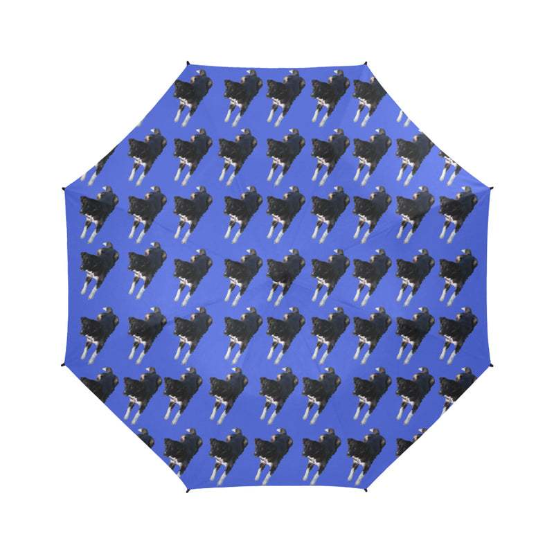 Border Collie Husky Mix Umbrella