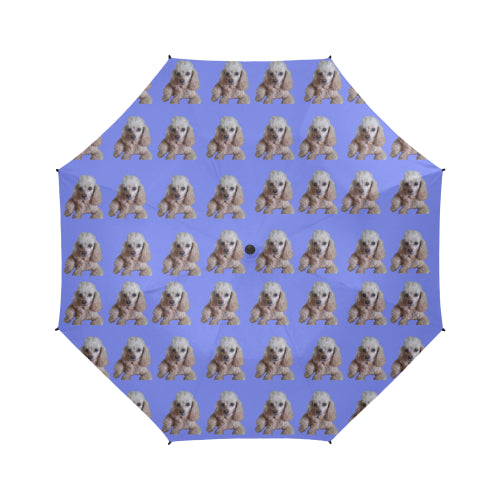 Toy Poodle Umbrella - Apricot