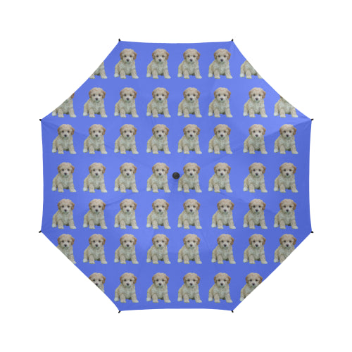 Toy Poodle Umbrella - Puppy