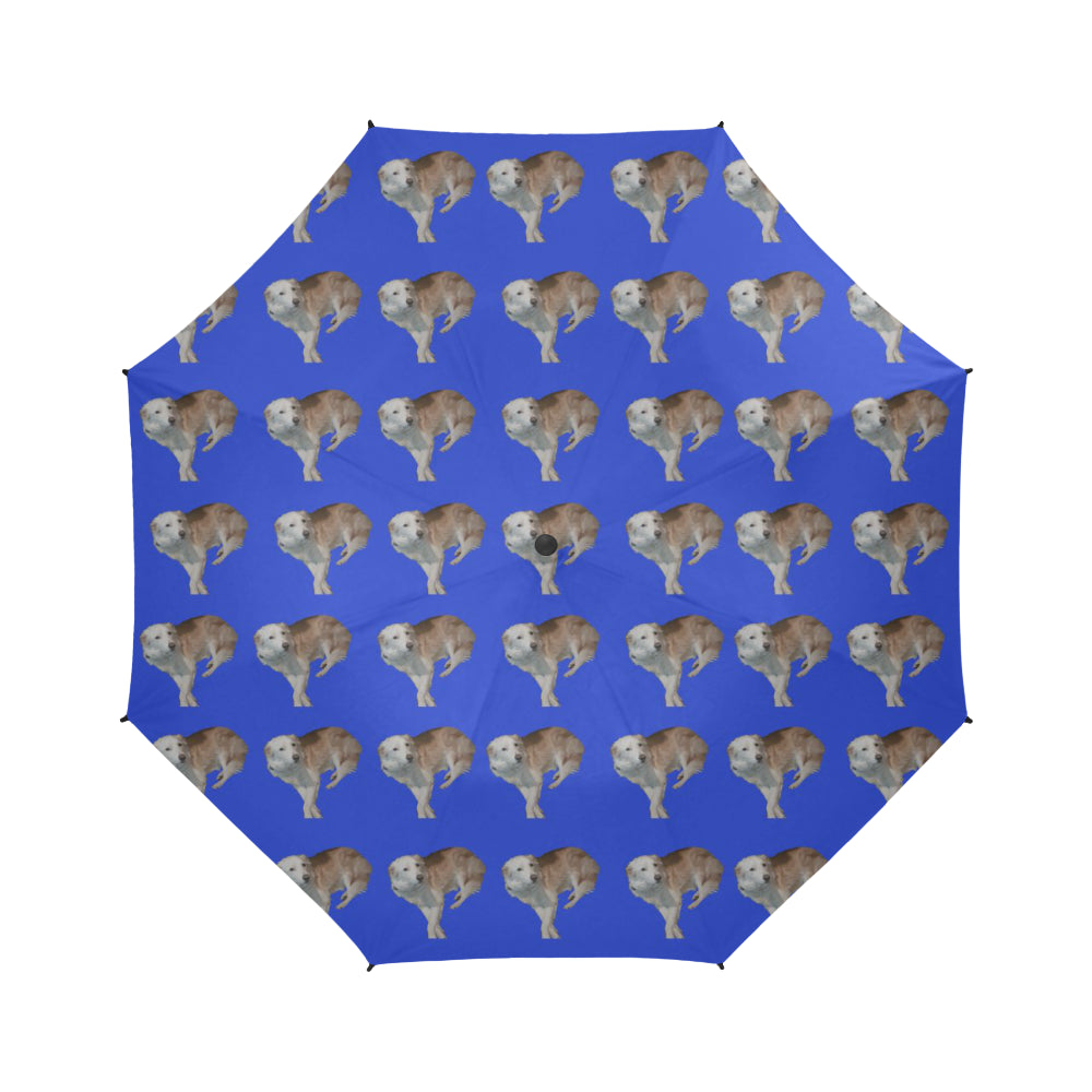Wheaten Border Collie Umbrella - Casper Semi Auto