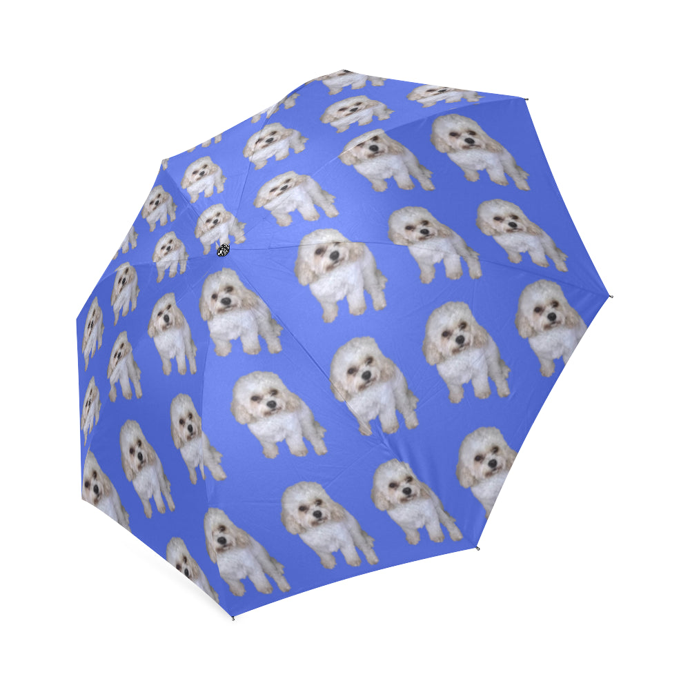 Cavachon Umbrella