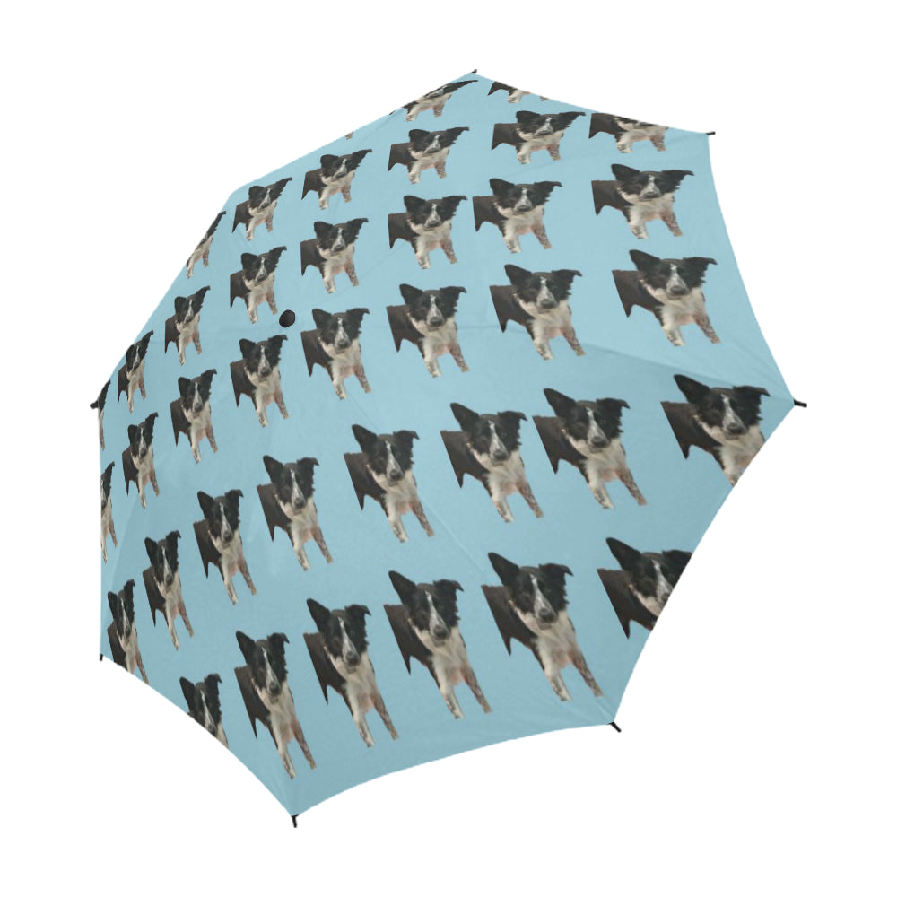 Border Collie Umbrella - Holly