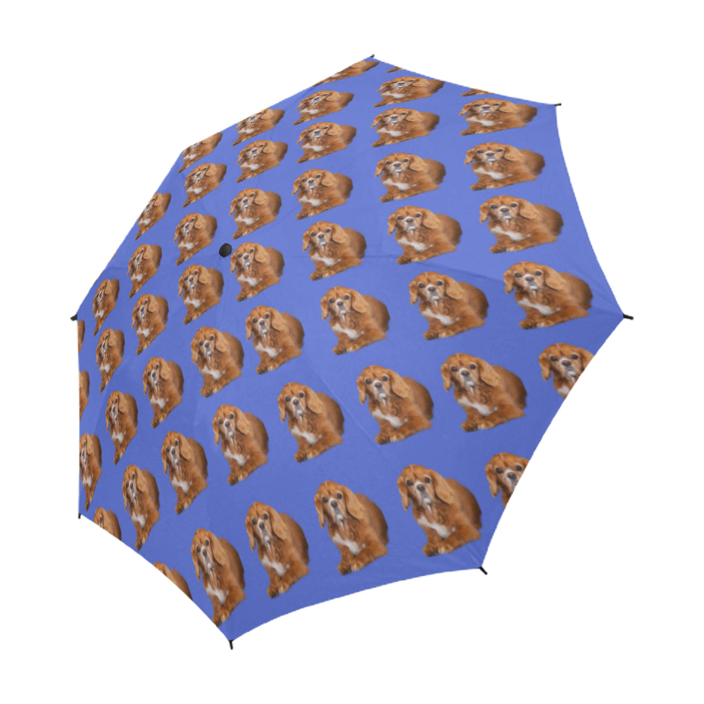 Cavalier King Charles Spaniel Umbrella - Ruby