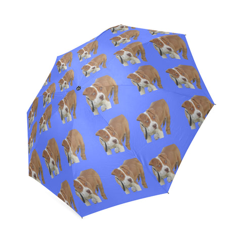 Pitbull Umbrella - Blue