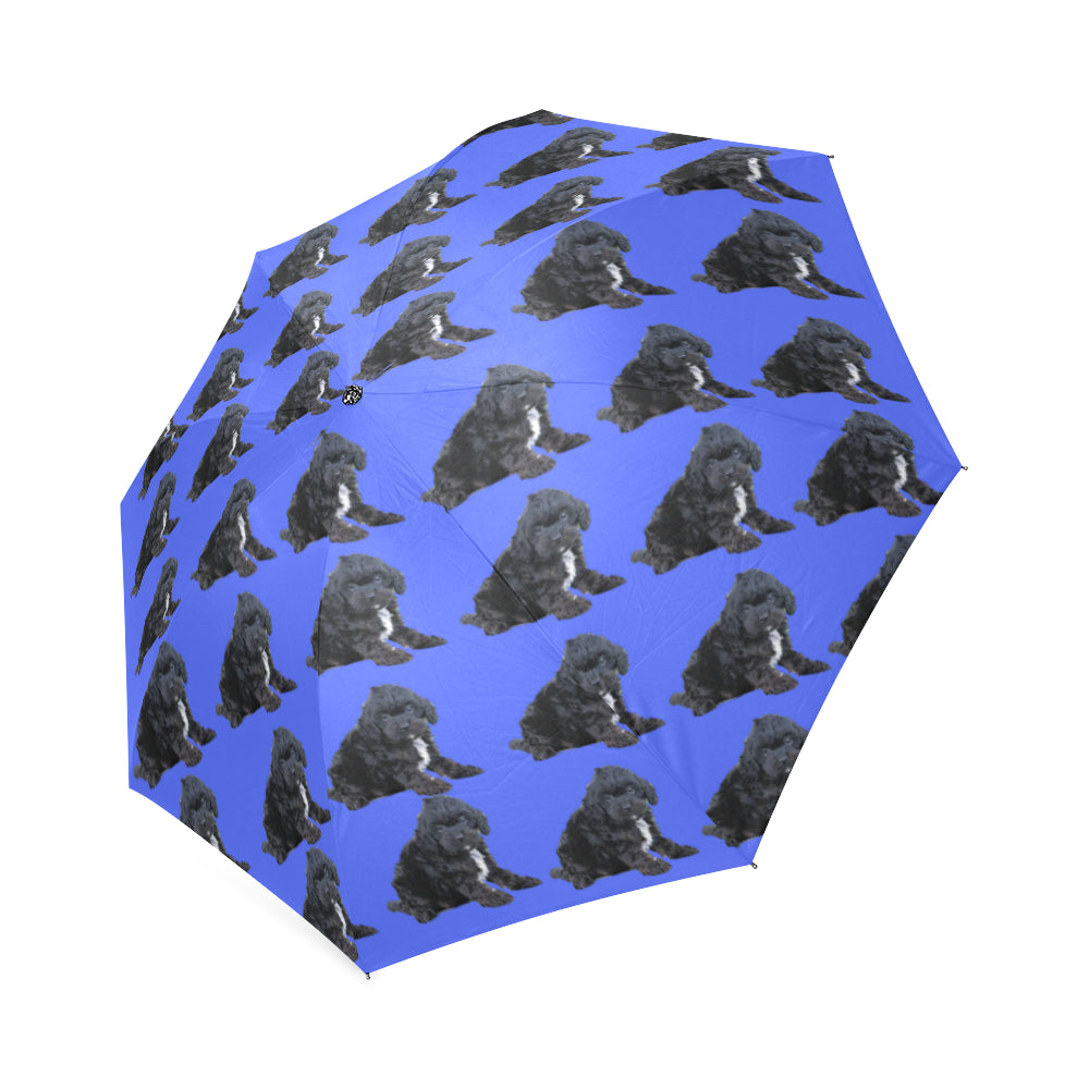 Cavapoo Umbrella - Black & White