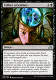 Colher o Cérebro / Pick the Brain-Magic: The Gathering-MoxLand