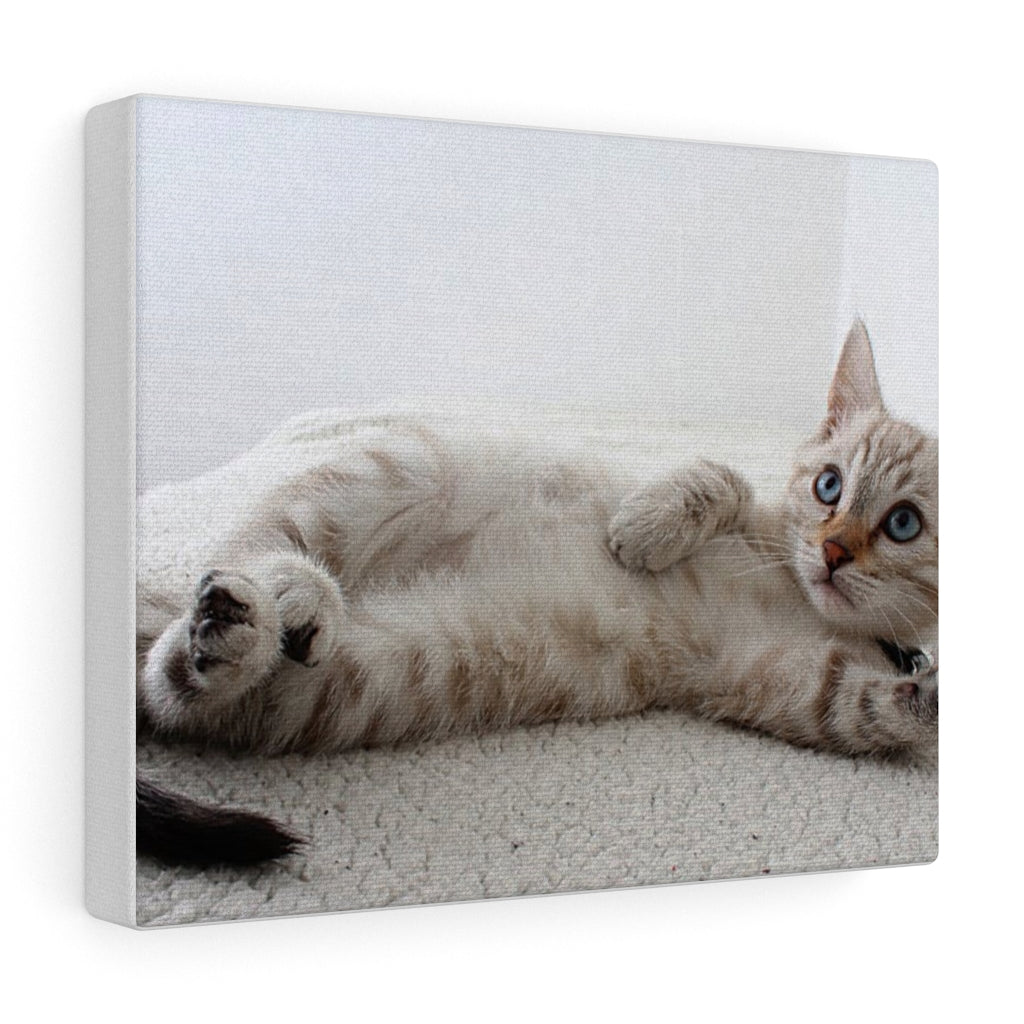 Adorable Cat Canvas Gallery Wall Art