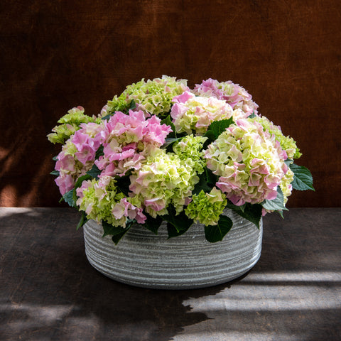 Pink Hydrangea Planter - medium