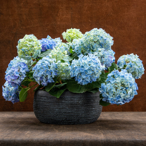 Blue Hydrangea Planter - large