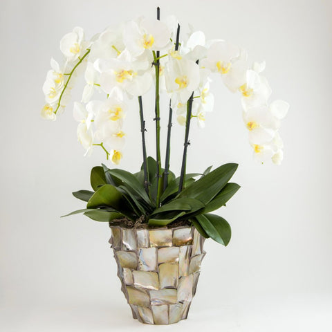 Faux Phalaenopsis Arrangement