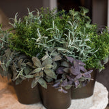 Mixed Silk Herbs In A Vintage Container