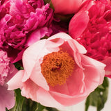 Vibrant & Colourful Mix Of Peonies