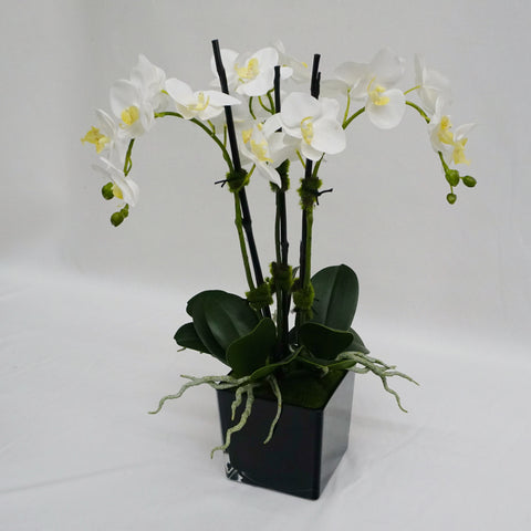 Modern Classic Orchids