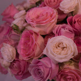 Classic -  Pink Rose Mix