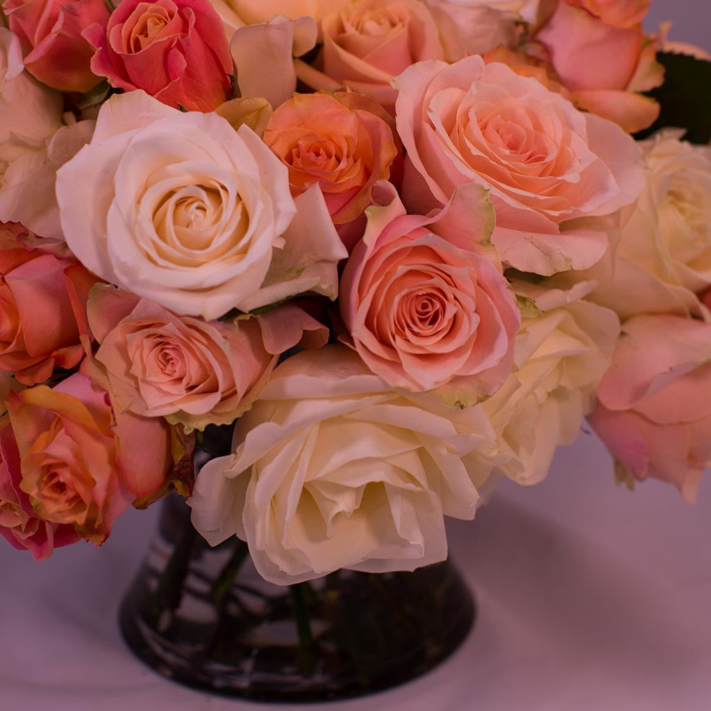 Coral and Cream Roses