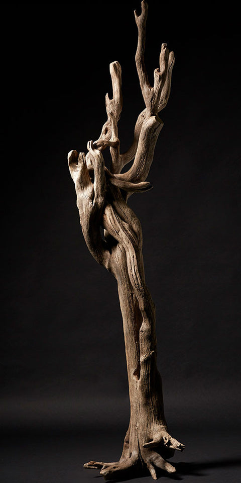 Freestanding dried driftwood