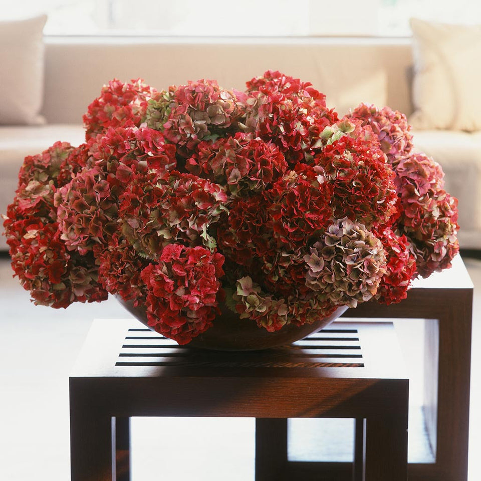 Lush composition of rich red and lilac hydrangeas