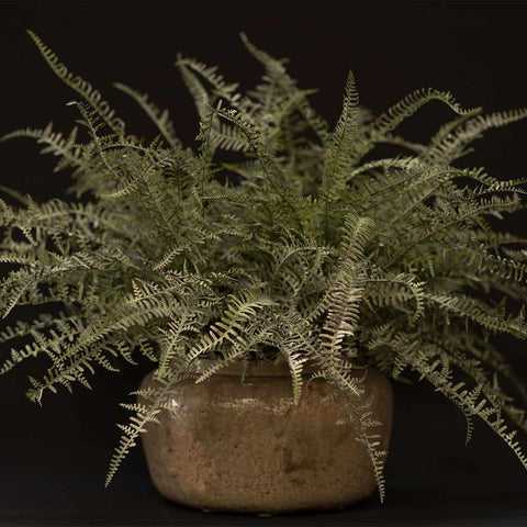 Faux fern in antique-style ceramic container