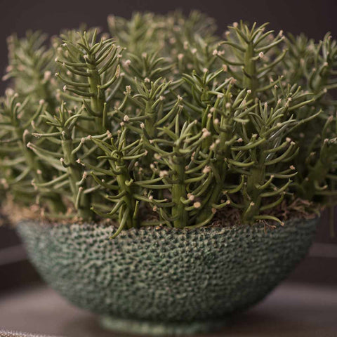 Faux succulent arrangement in bronze textured container