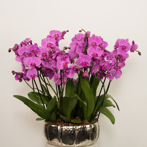 Fuchsia phalaenopsis arrangement in metal container