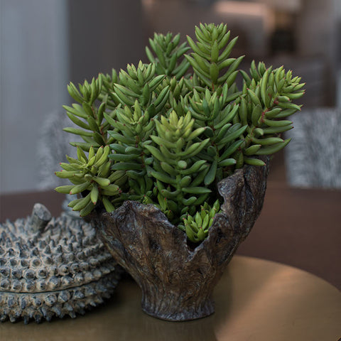 Arrangement of succulents in bronzed leaf-shape vessels