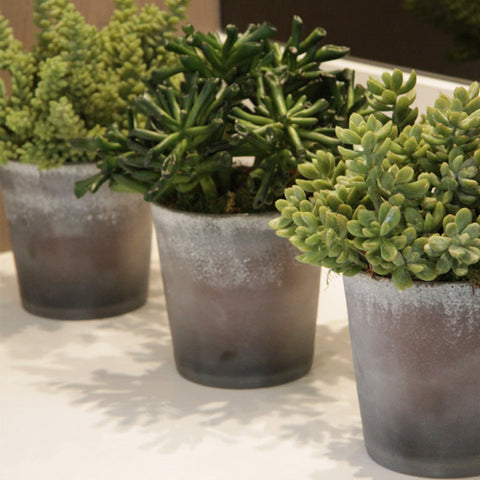 Trio of small arrangements of mixed succulents in frosted glass pots