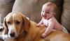 Could a Pet Protect Your Baby from Obesity and Allergies?