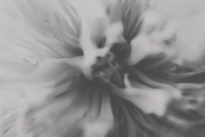 Peony - Light (black & white)