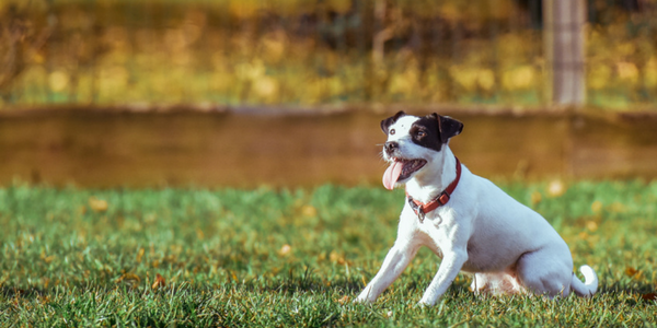 9 Top Training Tips For Your Dog