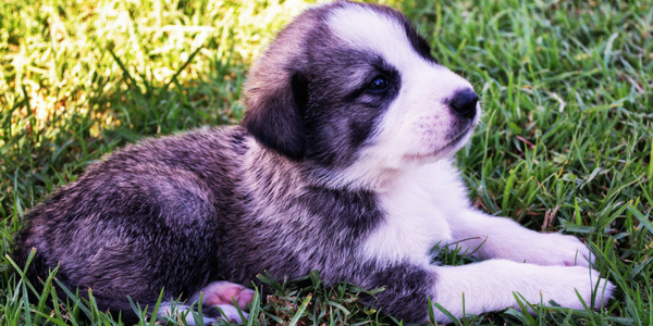 The 15 Most Important Questions To Ask Your Puppy Breeder