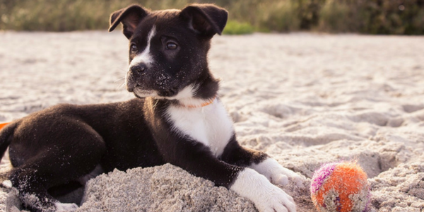 5 Things To Know Before You Get A Puppy