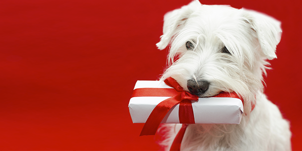 Christmas Shopping Guide for Your Dog