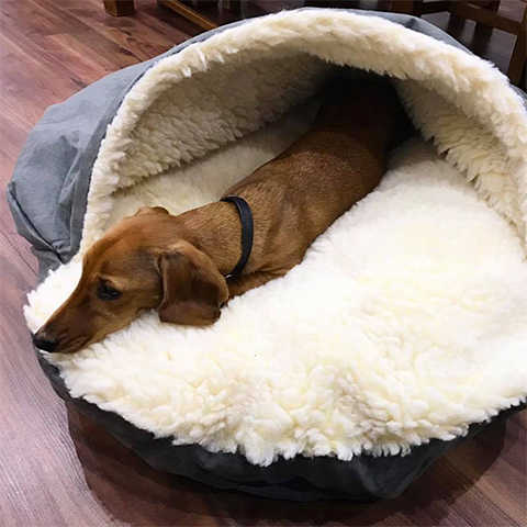 Cozy Cave Dog Bed for Dachsunds