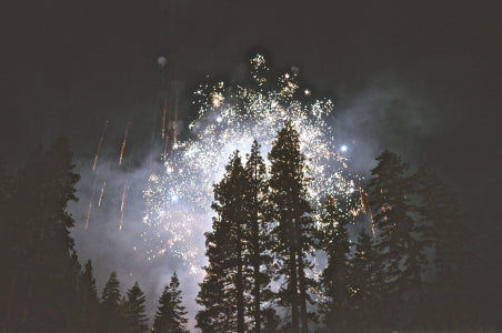 fireworks over trees