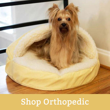 orthopedic dogs