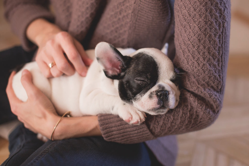 puppy in arms