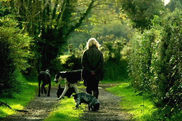woman walking with dogs