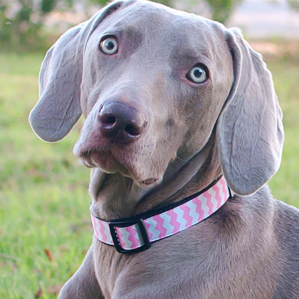 Paw Paws Dog Collar - Pink Chevron
