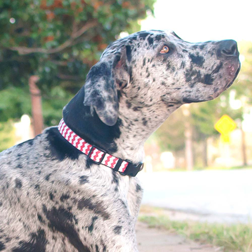 Paw Paws Dog Collars - Red Chevron