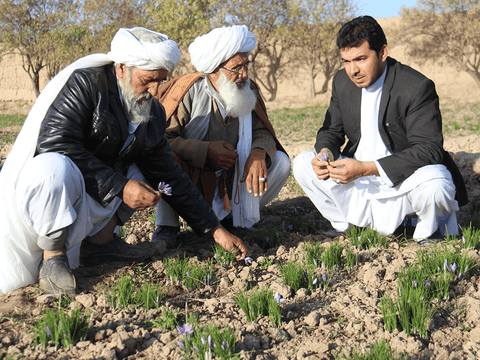 Rumi Spice sources directly from farmers and offers full transparency of supply chain