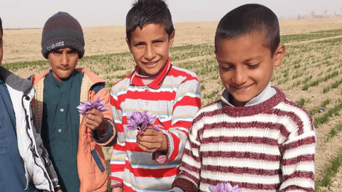 Afghan boys with crocus flower