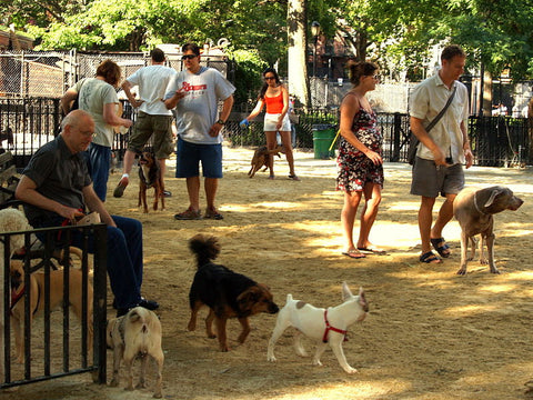 5 People You Meet at the Dogpark