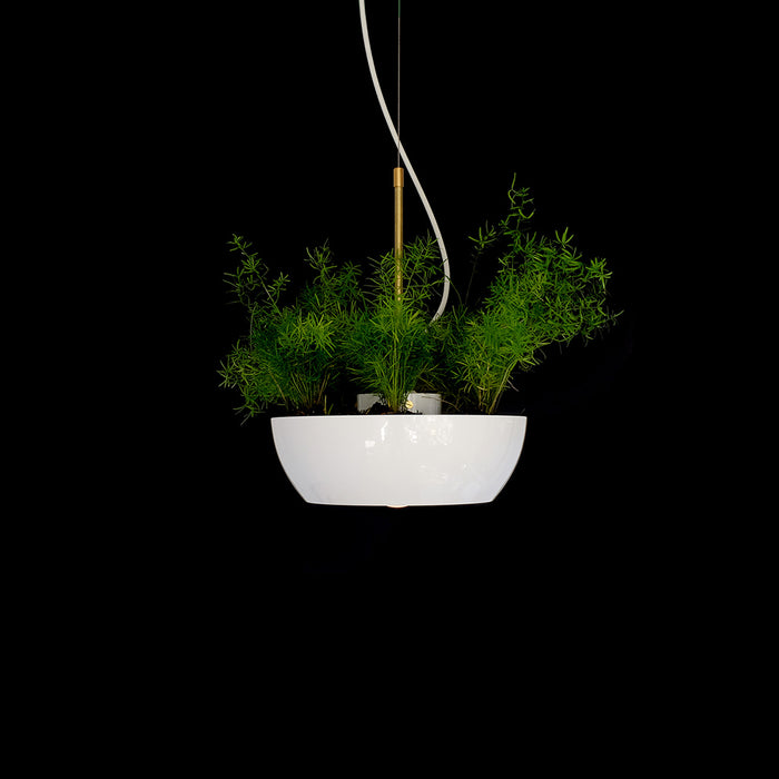 Playful Well Pendant Light and Planter by Object/Interface