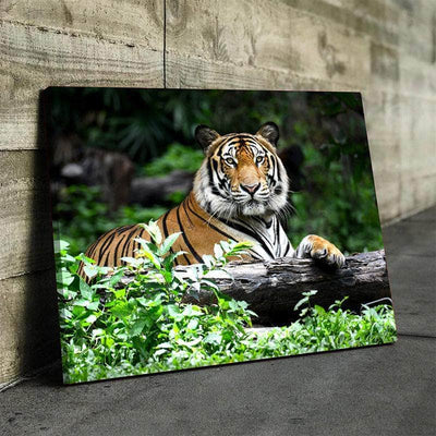 Tiger Canvas Set